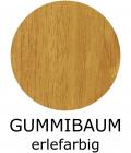16-gummibaum-erlefarbig41CA95B3-C82E-5776-890B-3AACA49F3462.png